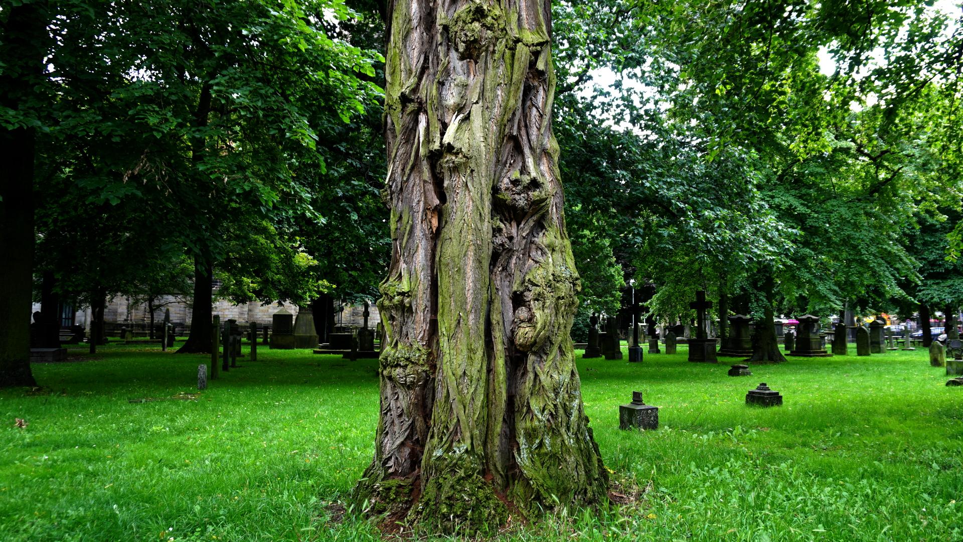 Friedhofsbaum an der Gartenkirche